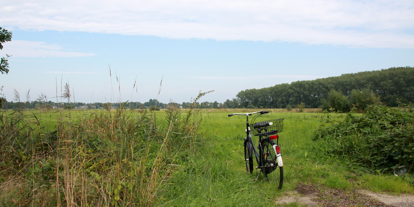 Ein Fahrrad steht am Rand einer Koppel im Grünen