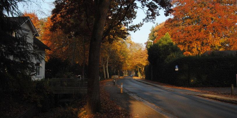 Eine von herbstlichen Bäumen gesäumte Straße in Oberneuland