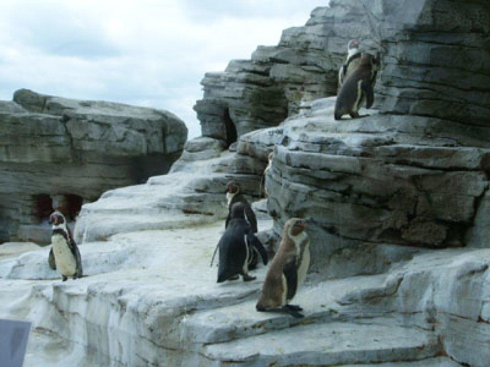 mehrere Pinguine