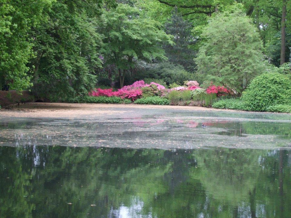 Rhododendronbüsche am Wasser