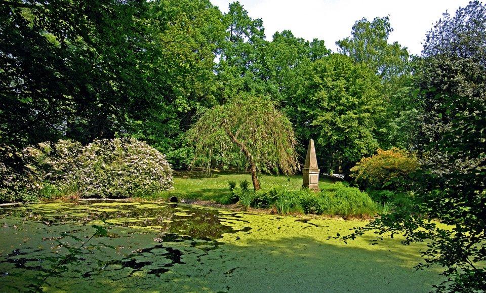 Blick auf einen kleinen See umringt von Bäumen und Büschen.