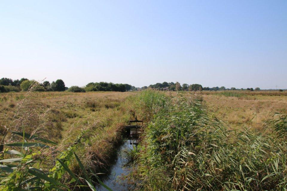 Ein Wassergaben in den Wiesen entlang der Ochtum im Naturschutzgebiet Park Links der Weser